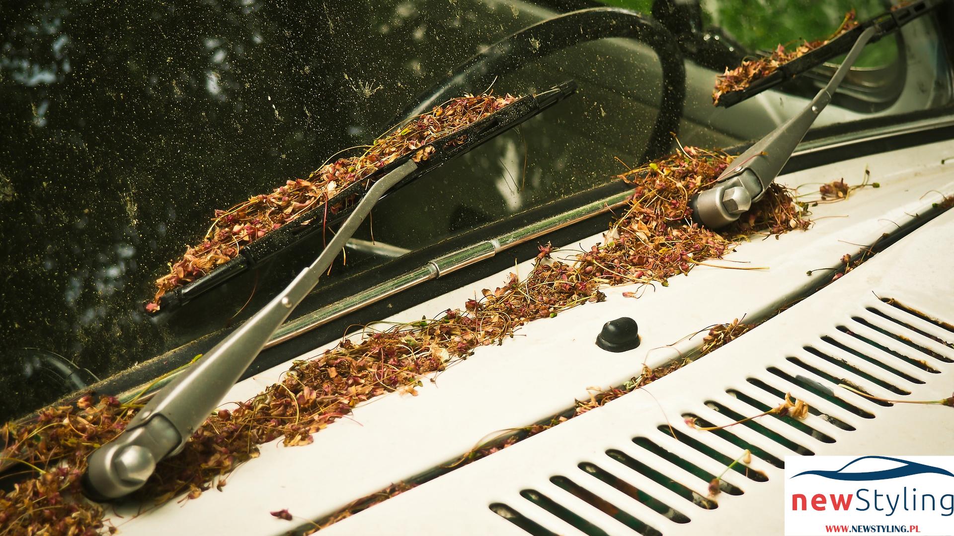 Top 5 – preparaty do czyszczenia szyb samochodowych