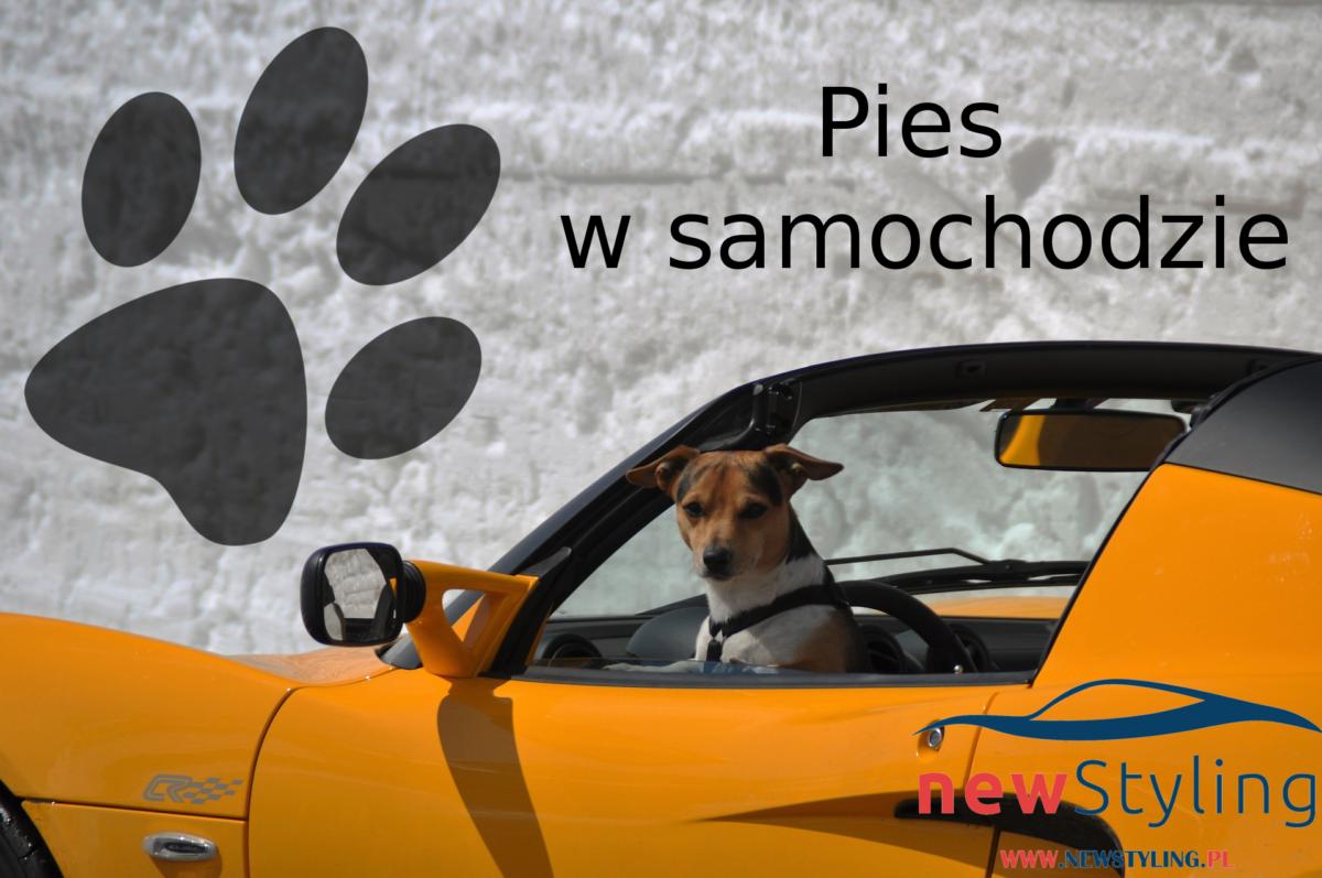 Pies w samochodzie, czyli jak przewozić psa w samochodzie